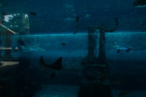 One tube goes through the aquarium, in which you can see sharks and rays from your innertube.
